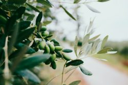 goFAT® Olive Oil Fat Powder